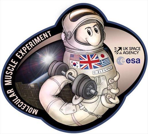 skoulikia-astronautes